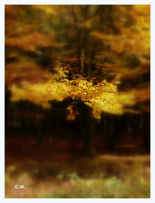 ...Herbst...>2