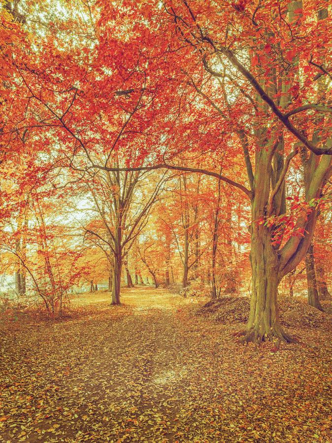 Herbst_2