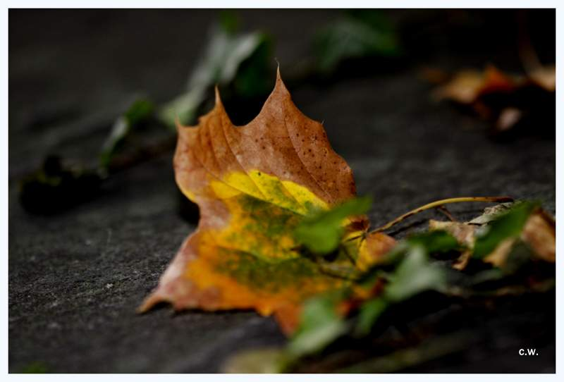 ...Herbst...>3