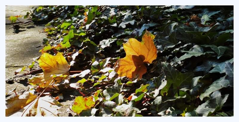 .....Herbst.....>4