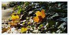 .....Herbst.....>4<.....