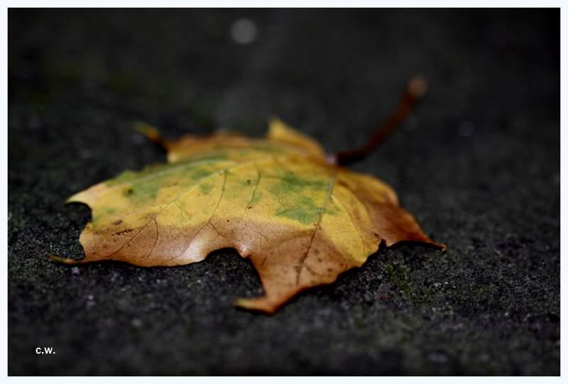 .....Herbst.....>5