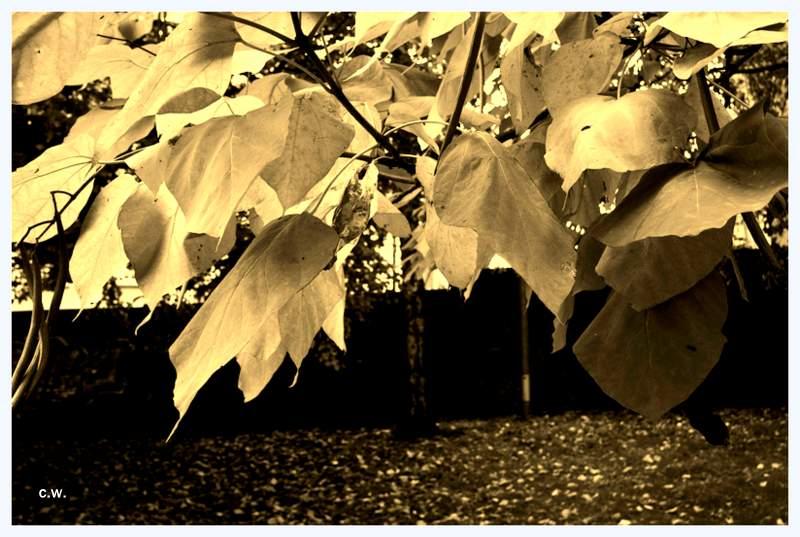 .....Herbst.....*9*.....