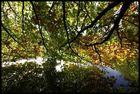 Herbstahnung......