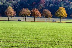 Herbstallee bei Schöngeising