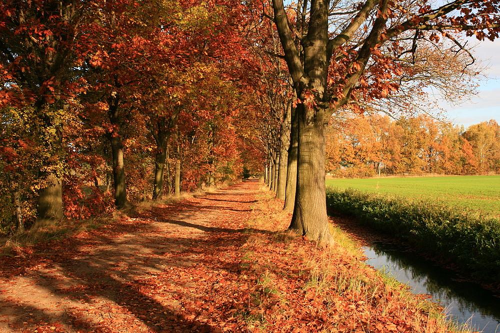 Herbstalleen...