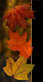 Herbstallerlei 12