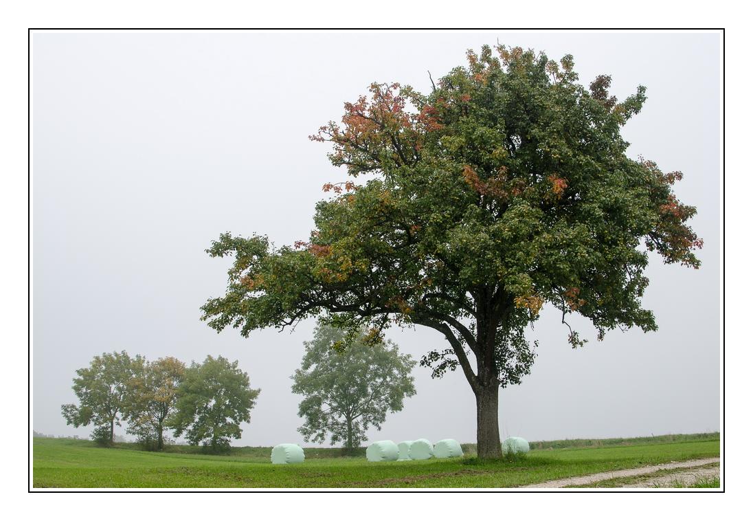 Herbstanfang 2