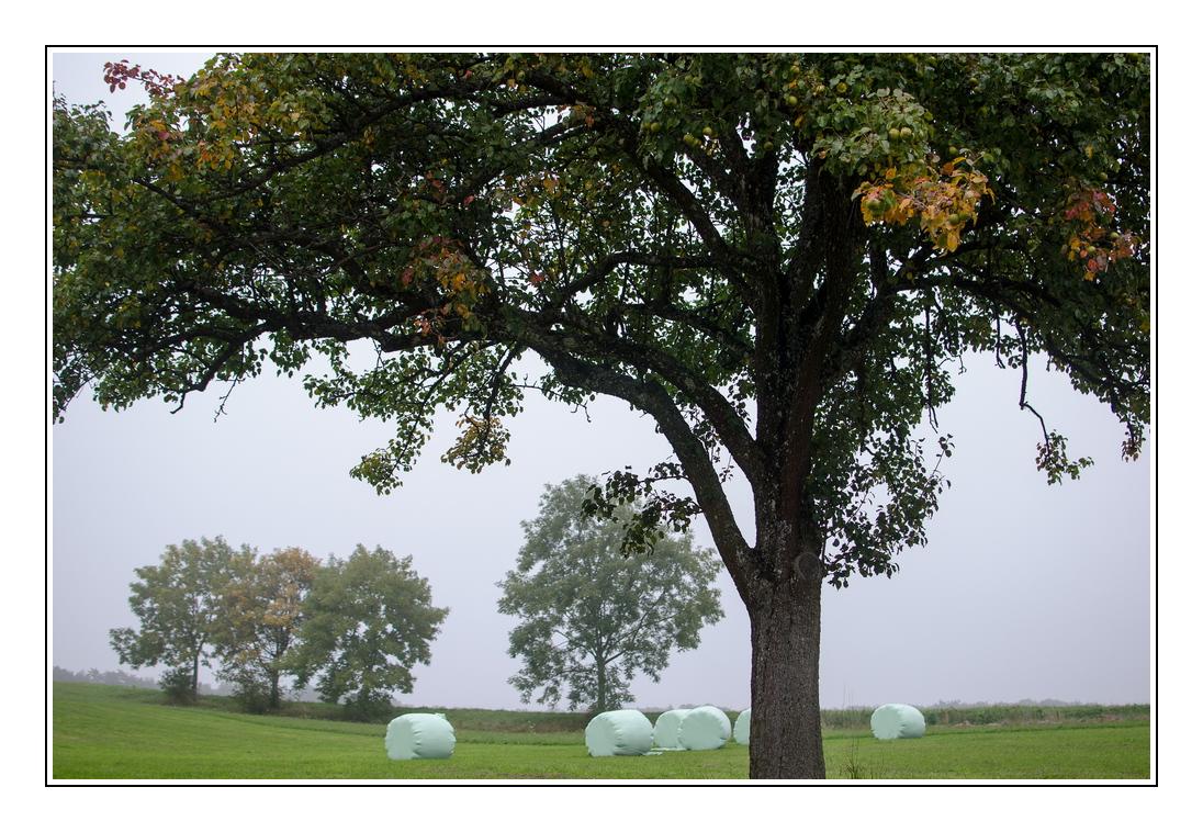 Herbstanfang 3