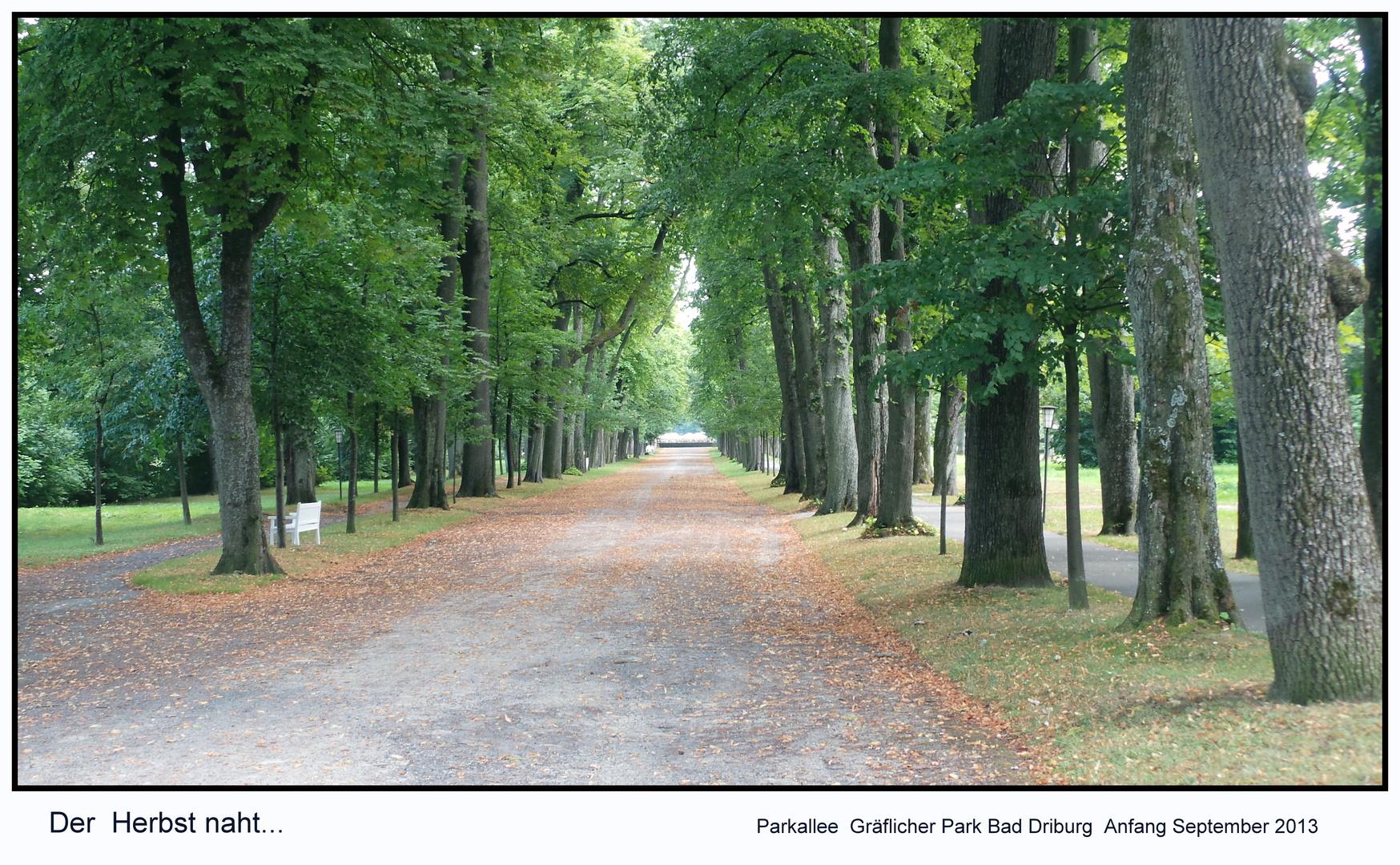 Herbstanfang - Allee Gräflicher Park Bad Driburg