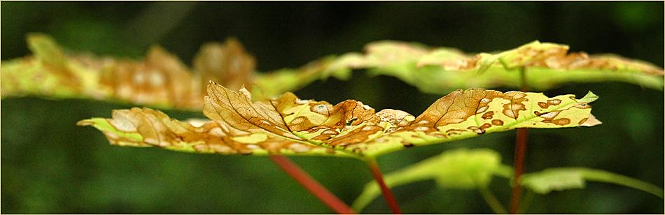 Herbstanfang I