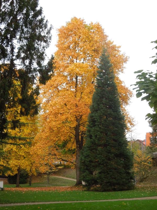 Herbstanfang im Kasinopark in Georgsmarienhütte