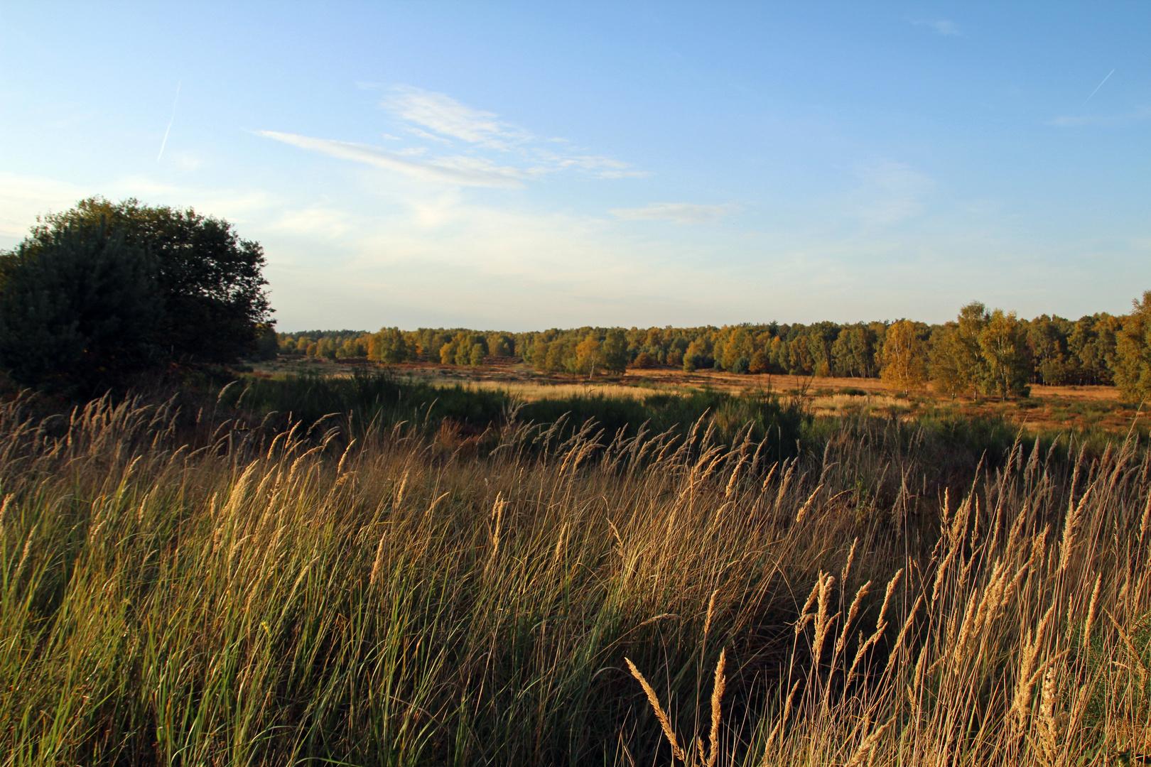 Herbstanfang in der Wahnerheide