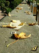 Herbstanfang und die ersten Blätter fallen