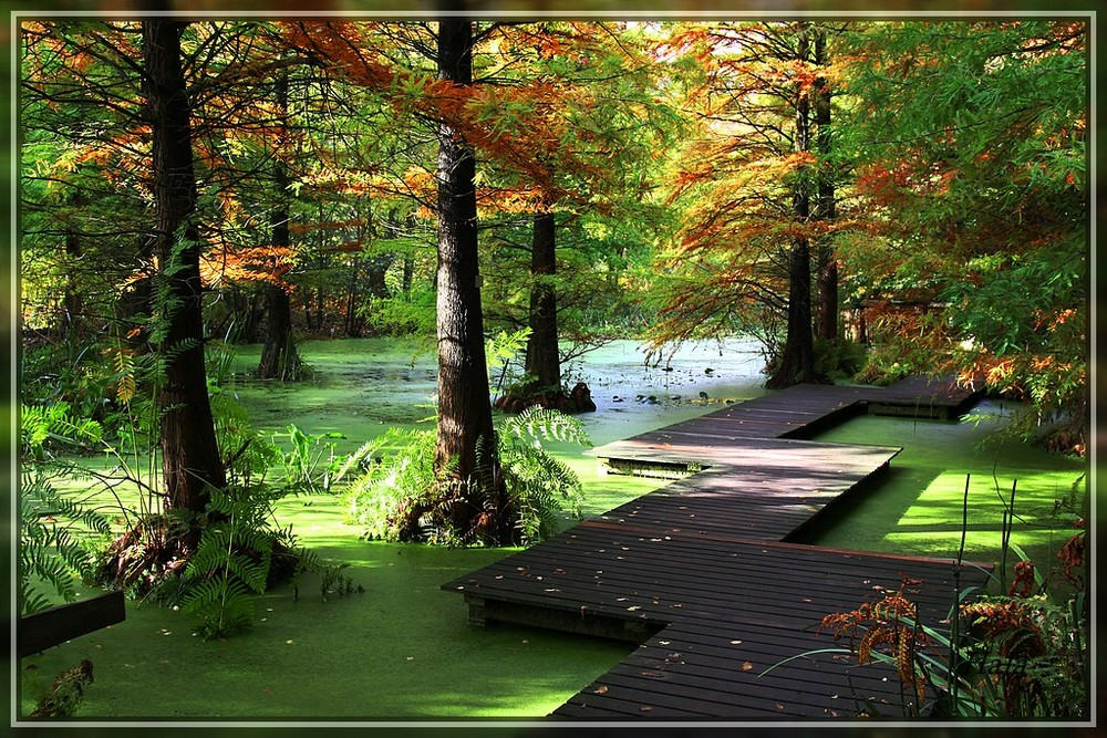 Herbstansichten,,,