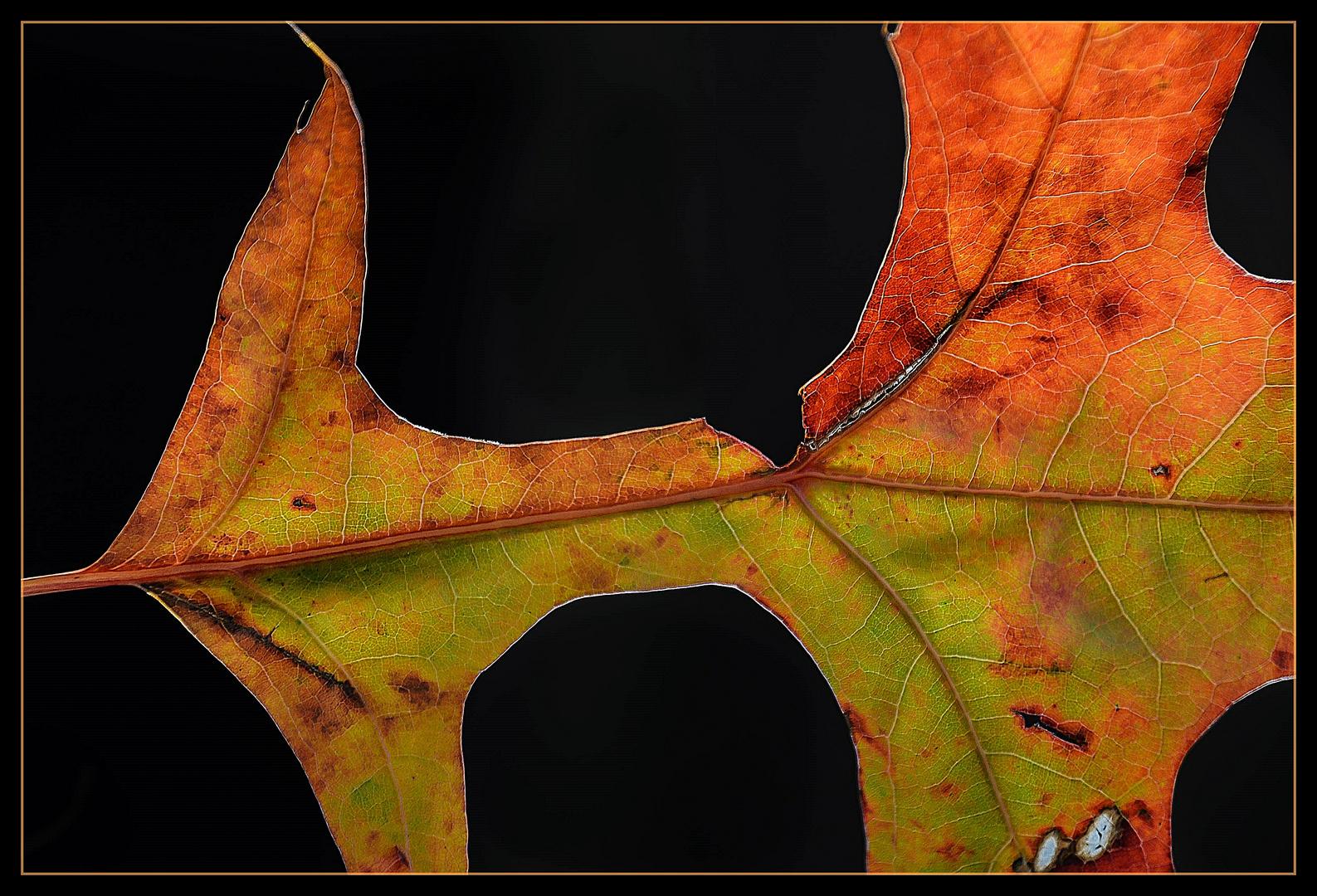 Herbstansichten die Erste