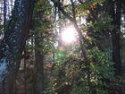 Herbstausflug, Abendstimmung im Wald