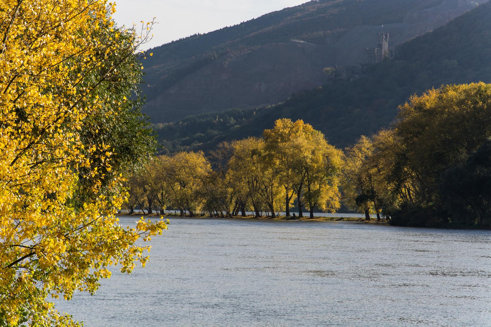 Herbstausflug in den Rheingau (2)