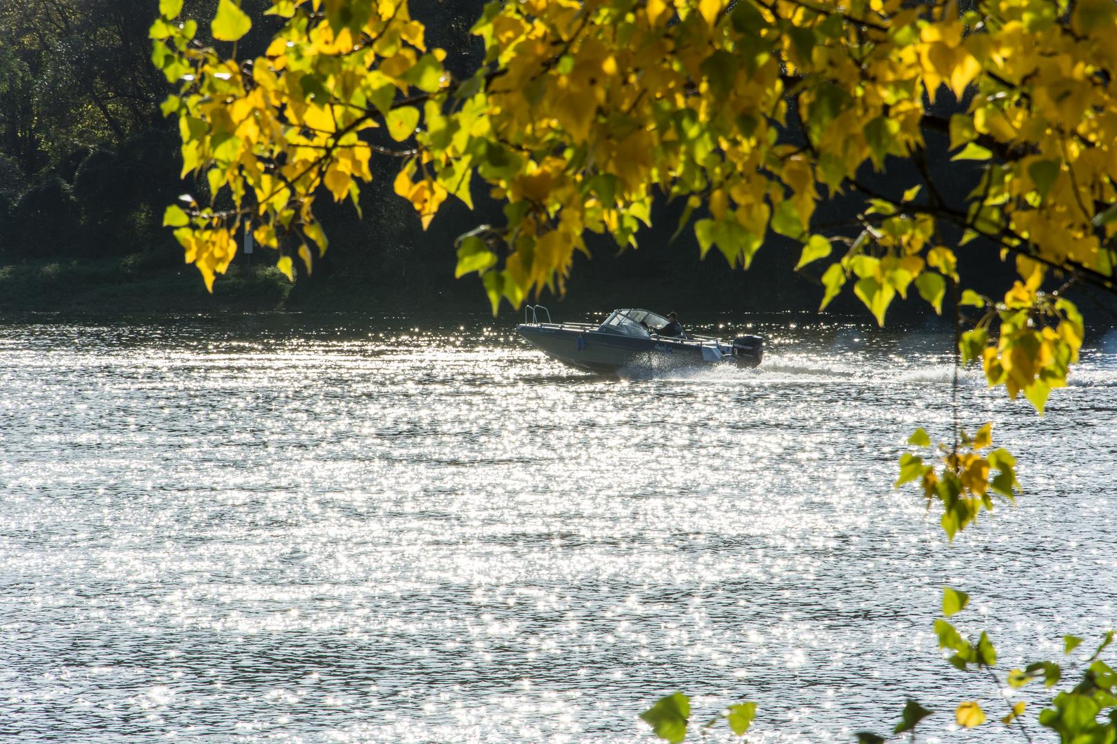 Herbstausflug in den Rheingau (3)