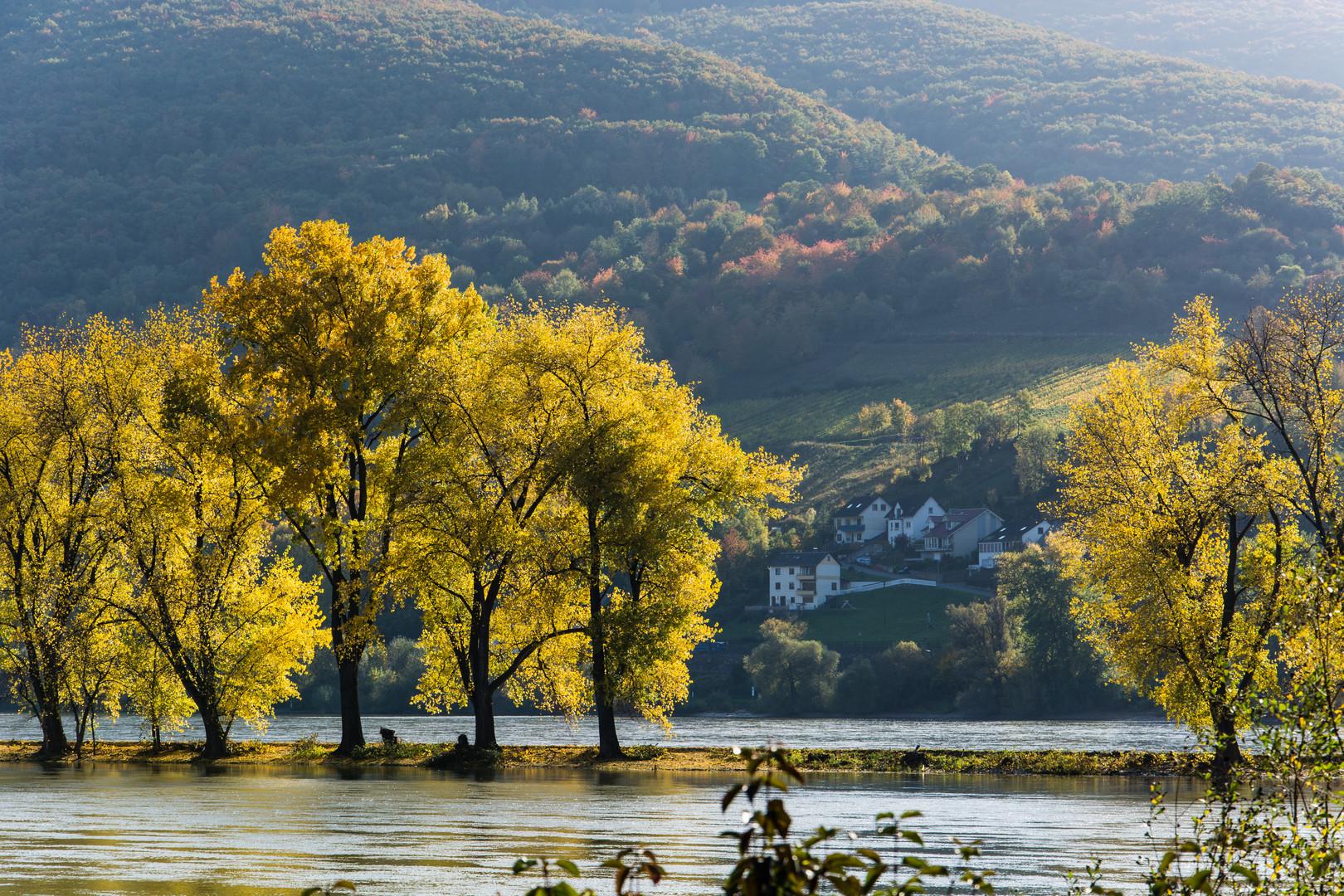 Herbstausflug in den Rheingau (6)