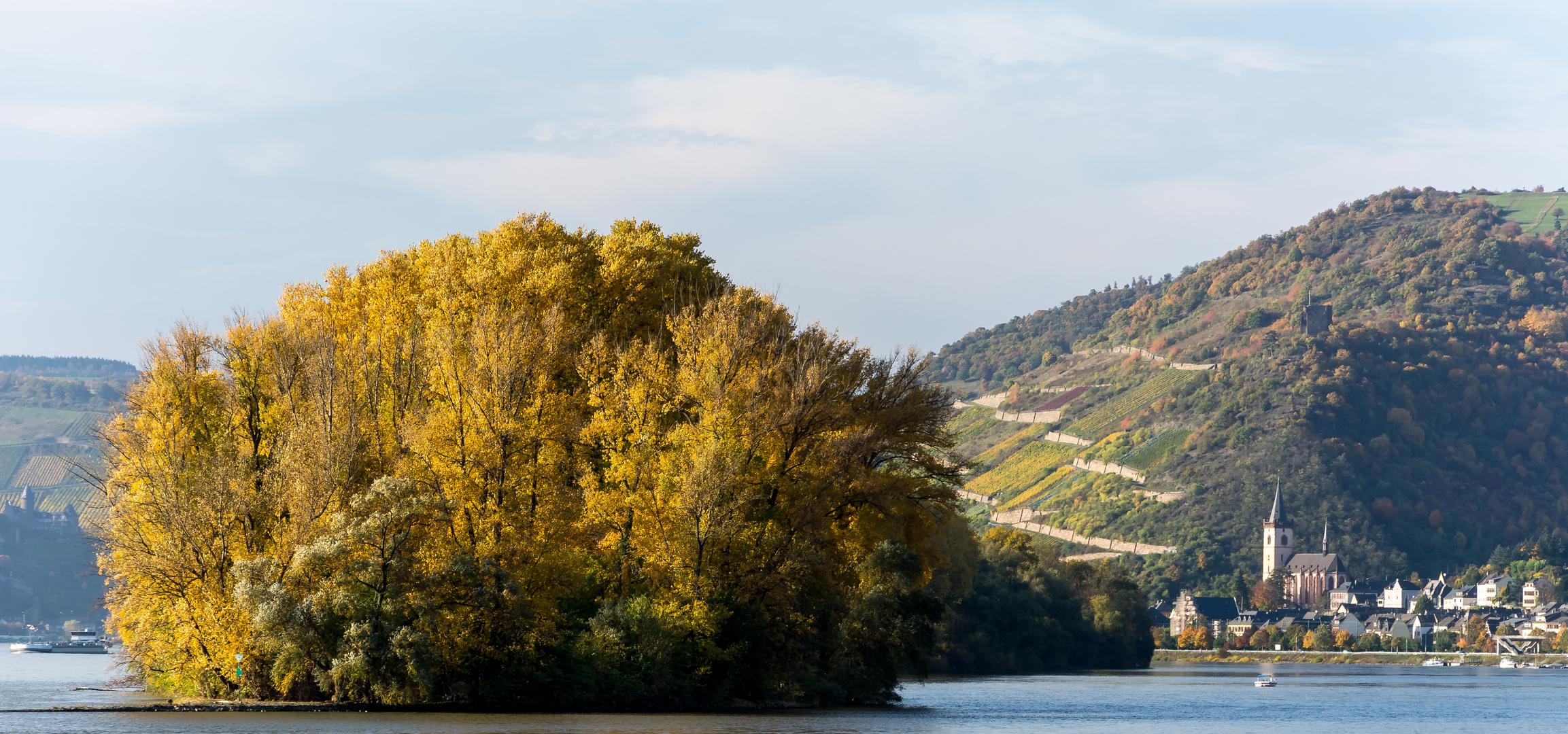 Herbstausflug in den Rheingau (8)