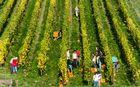 Herbstausflug in den Rheingau (9)