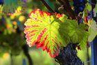 Herbstauslese