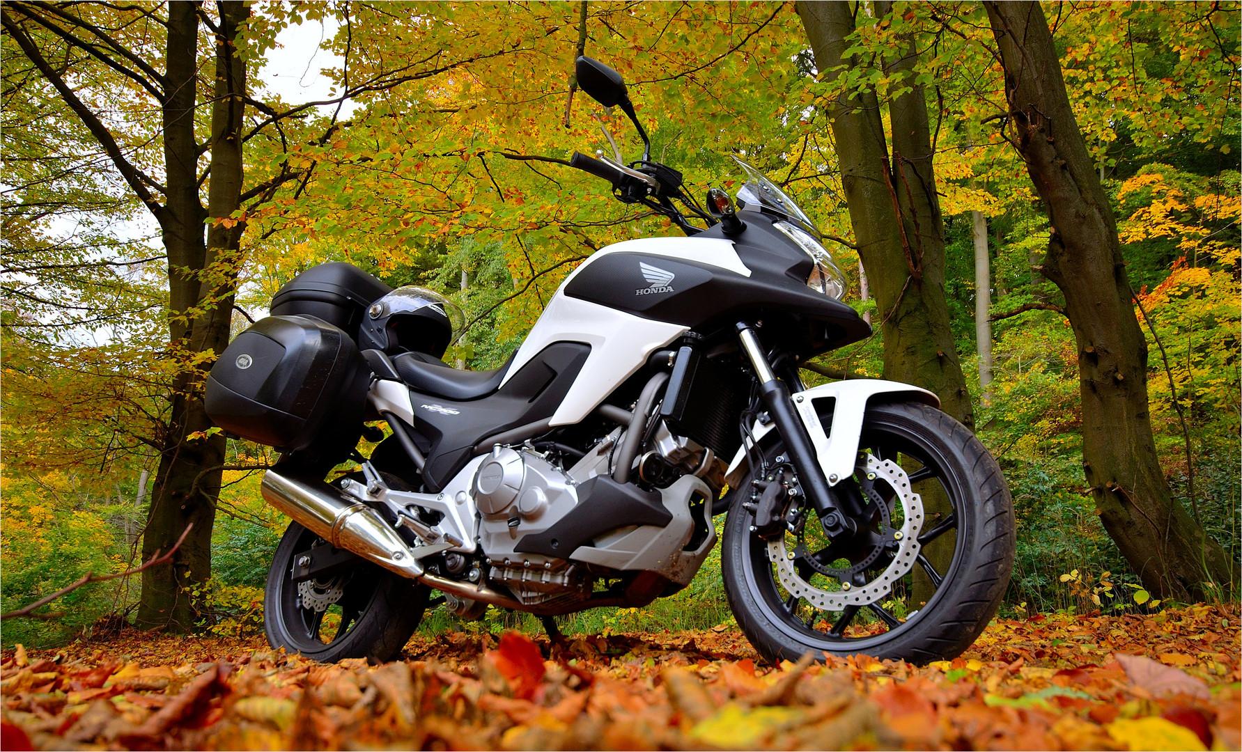 Herbstausritt...