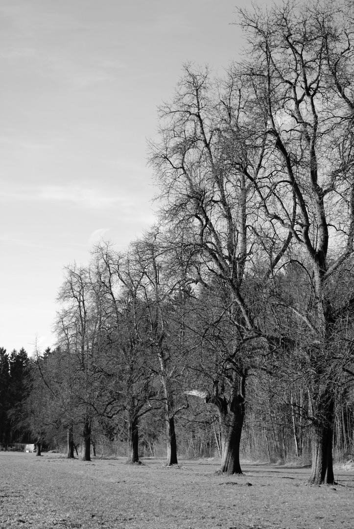 Herbst_Bäume