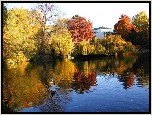 Herbstbäume am großen See