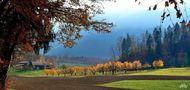 Herbstbäume zieren den Bauernhof von Juan
