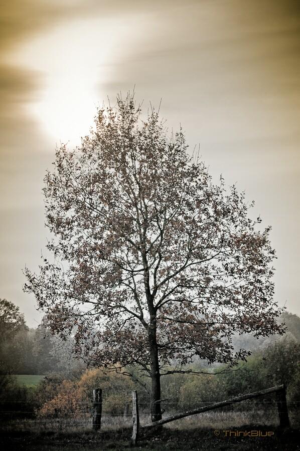 Herbstbaum...
