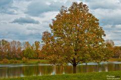 Herbstbaum am See