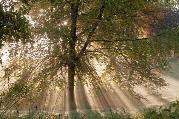 Herbstbaum im Morgenlicht