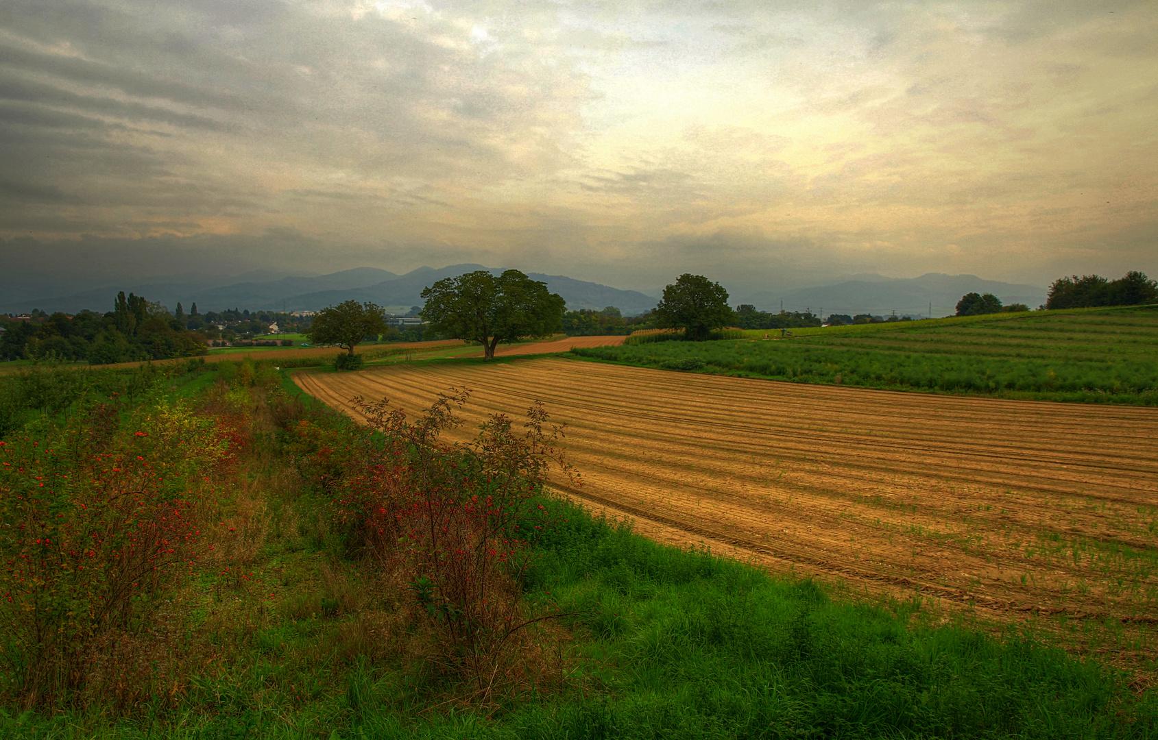Herbstbeginn im Breisgau