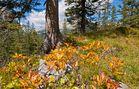 Herbstbeginn in den Bergen.....