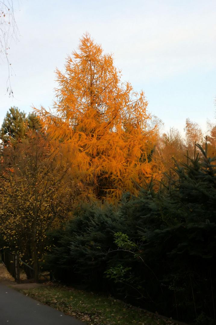 Herbstbild 1