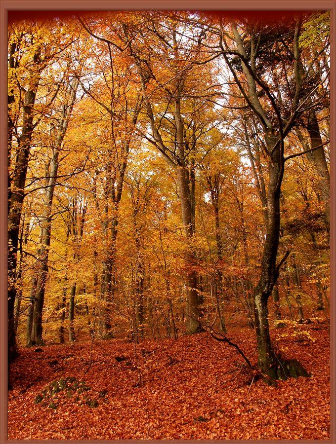 Herbstbild 2