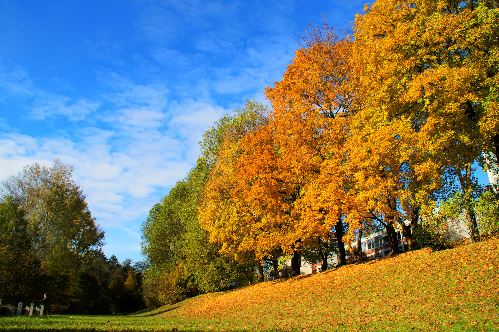 Herbstbild Farbenspiel Nürnberg Prinzregentenufer