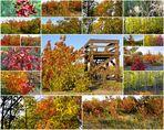Herbstbilder 2011