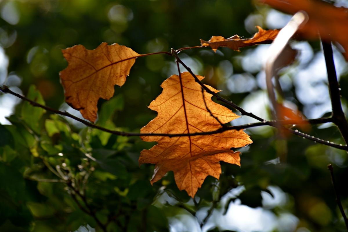 Herbstblätter....