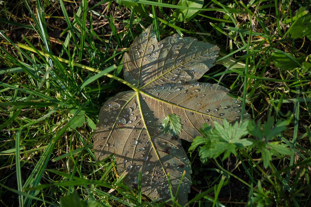 Herbstblätter (1)