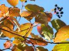 Herbstblätter 2