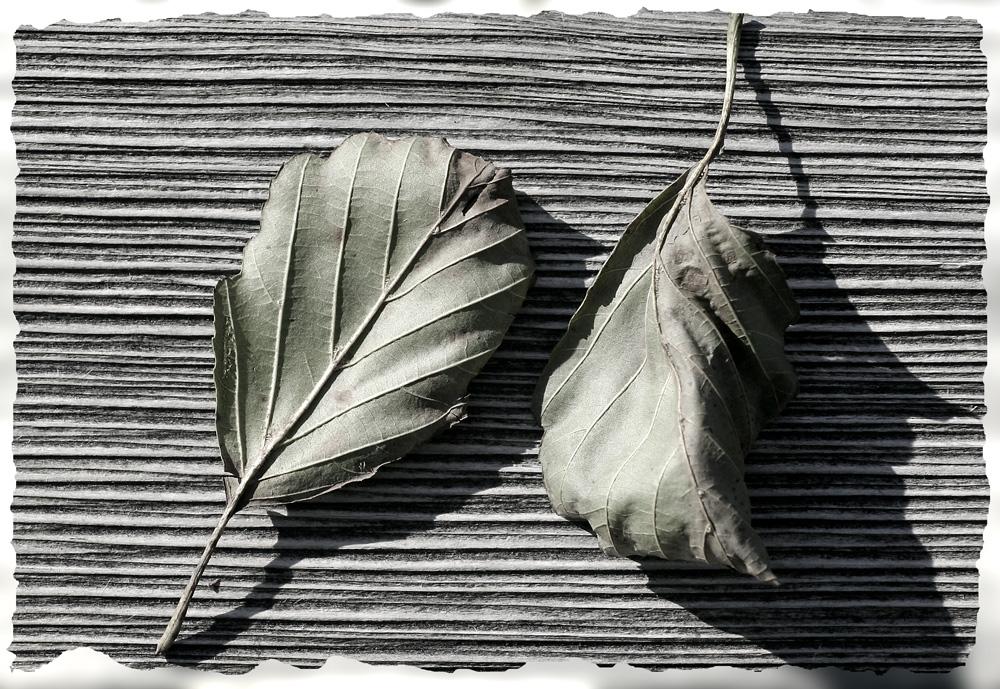 Herbstblätter am Badesteg