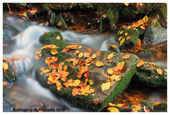 Herbstblätter am Seelensteig
