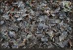 Herbstblätter an einem frostigen Wintermorgen