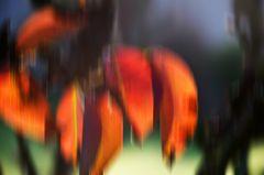 Herbstblätter im Klostergarten von Seligenstadt