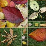 Herbstblätter vom Winde verweht