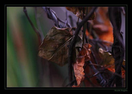 Herbstblätter, welke Kraft