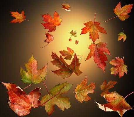Herbstblätterwirbel